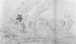 Rosa Bonheur sketch of bulls with notes.