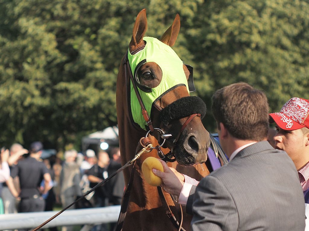 A horse wearing a green hood with black blinkers behind the eyes.