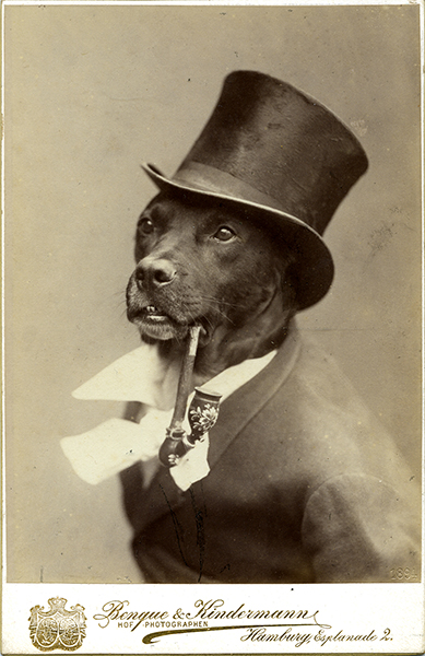 vintage photo of a dog in a top hat and white tie suit