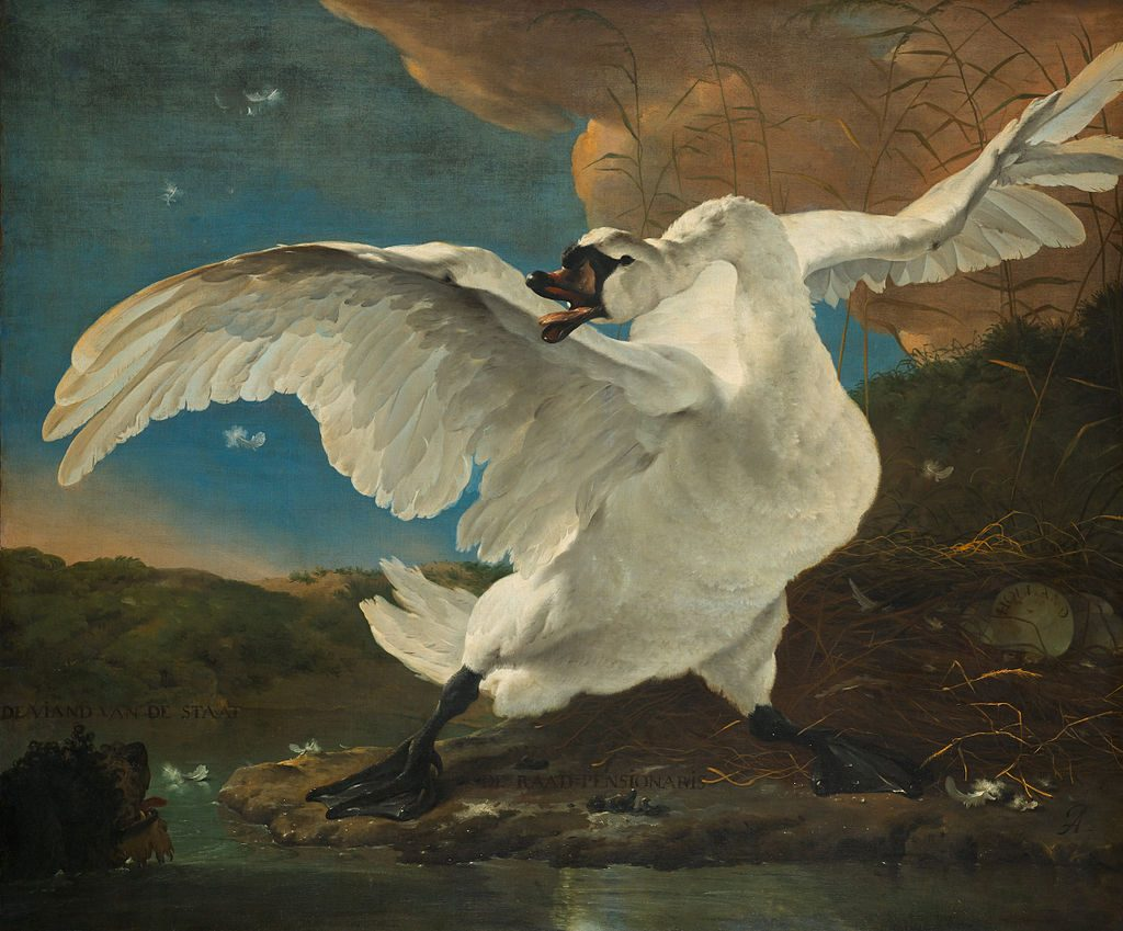 A painting of a swan defending its nest.