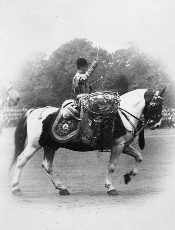 An old picture of a piebald drum horse.