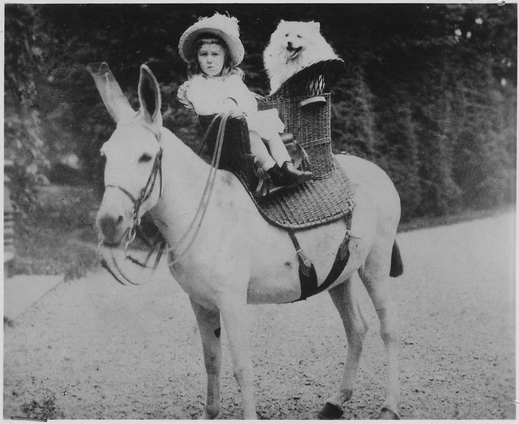 Donkey and toddler FDR in a cute sun dress and hat. The future president is wearing the sun dress, not the burro.