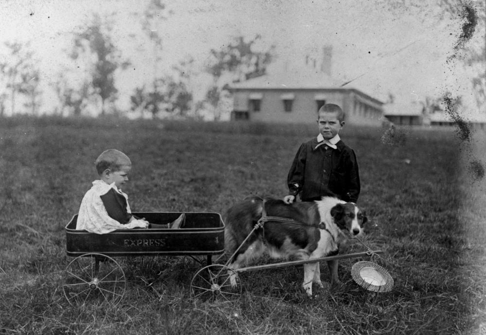 A baffled dog hitched to a wagon, a dubious looking boy behind the dog, and a crying child in the wagon. Fun times.